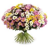 Хризантемы к 8 марта