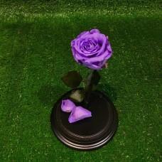Роза в колбе №2 Лила