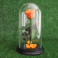 Роза в колбе №3 Пав-Пав