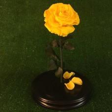 роза в колбе №5 Cафран