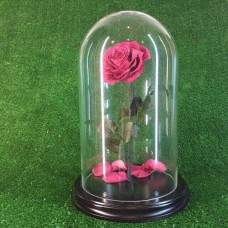 роза в колбе №5 Фламинго