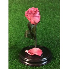роза в колбе №2 Фламинго