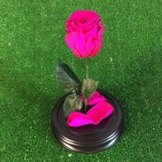 роза в колбе №2 Шокин Пинк