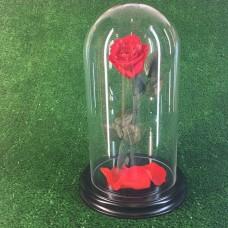 роза в колбе №3 Вермонт Ред