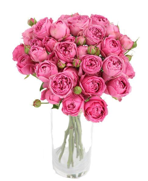 Доставка цветов, «La Buket» - магазин цвeтов