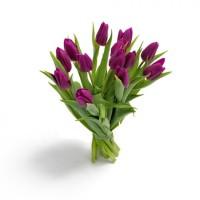 Тюльпаны к 8 марта | Долина Роз