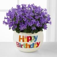 Цветы на день рождения с доставкой | Долина Роз