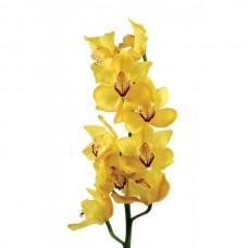 Орхидея Цимбидиум (ветка)