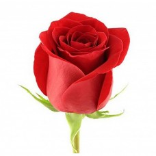 Эквадорская красная премиум роза