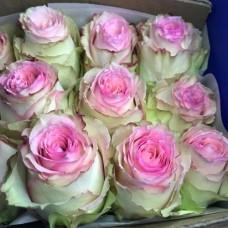 """Премиум роза """"Эсперанса"""""""