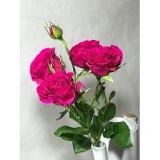 Кустовая Премиум роза