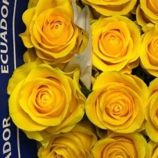 Жёлтая эквадорская роза