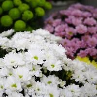Всегда свежие цветы в Долине роз | Новая поставка  29 августа