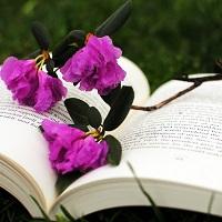 Подбор цветов | Долина роз
