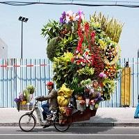 Транспортировка цветов | Долина Роз