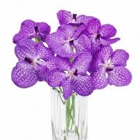 Орхидеи - магические цветы | Долина Роз