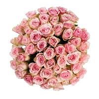 Розы, розы и розы | Долина Роз