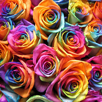 Букет из разноцветных роз | Долина Роз