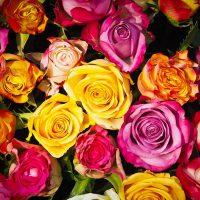 Букет эквадорских роз | Долина Роз
