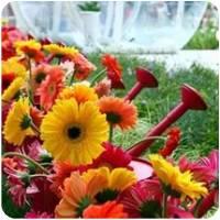 Цветочные фестивали мира | Долина Роз