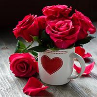 Розы - лучший подарок | Долина Роз