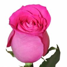 """Купить премиум розу """"Топаз"""""""
