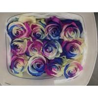 Роза Премиум радуга