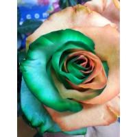 Цветы розы | Долина Роз