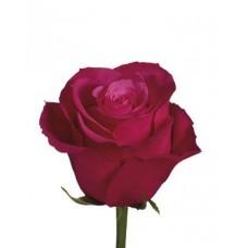 """Купить премиум розу """"Черри О"""""""