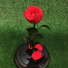 "Роза в колбе №3 ""Верона Ред"""