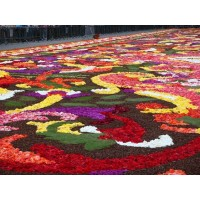 Рекорд в Гватемале: ковёр из цветов в 2 километра