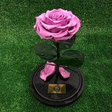 Долговечная Роза в колбе №3 Сиреневая