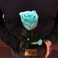 Роза в колбе №2 Тиффани