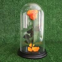 Роза в колбе №2 Пав-Пав