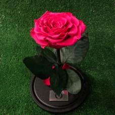 Долговечная Роза в колбе №3 Малиновая