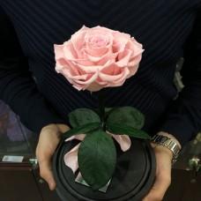 Роза в колбе №3 Нежно-розовая