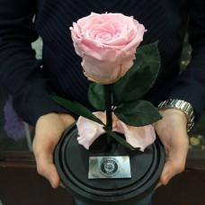 """Долговечная Роза в колбе №2 """"Пинк"""""""